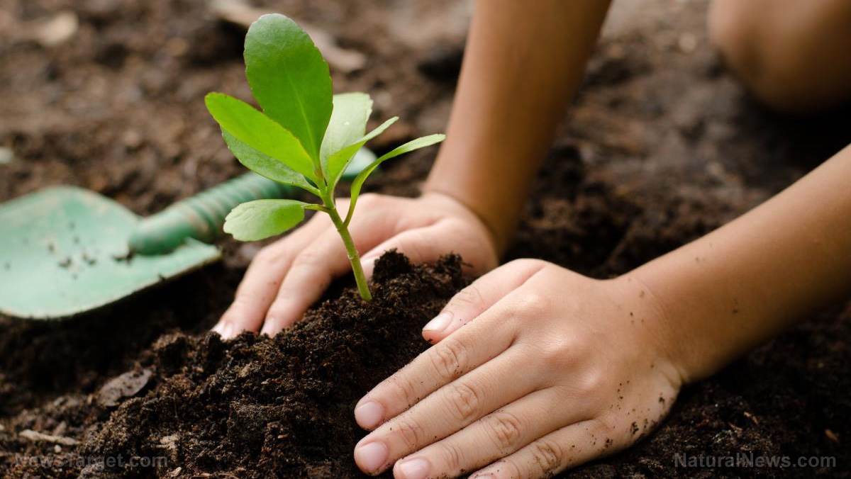 Plant Tree Seed Kid Hand in a  Garden